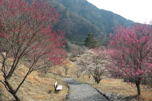コンヤ温泉郷