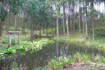 高山の池(高山・市民の森)
