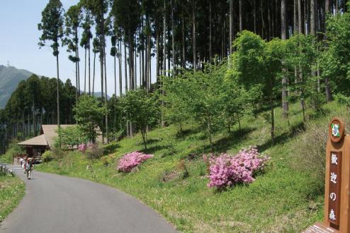 高山・市民の森