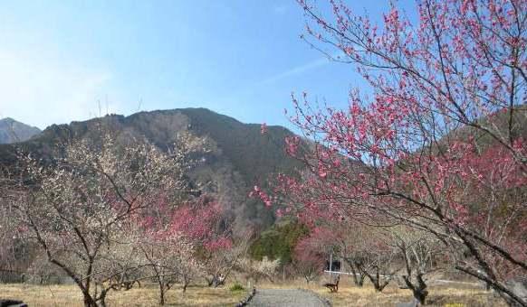 Village Umezono of Umegashima konya. jpg