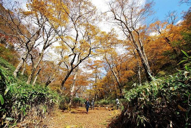 Colored leaves of Umegashima, Abe Pass. JPG