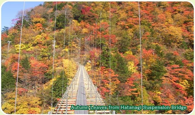 Colored leaves of hatake*daitsurikyo (hatanagiotsuribashi)