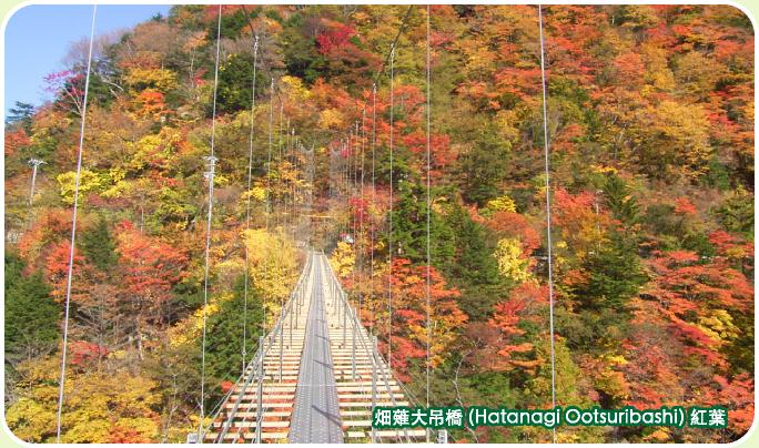 畑薙大吊橋(hatanagiotsuribashi)的紅葉