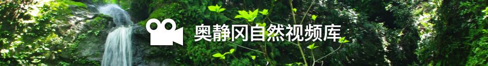 奥静冈自然视频库