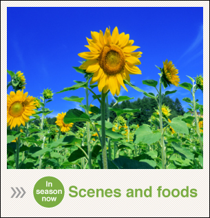 Scenes and foods