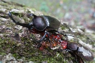 甲蟲4.jpg