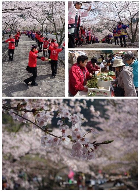 コンヤ桜祭り.jpg
