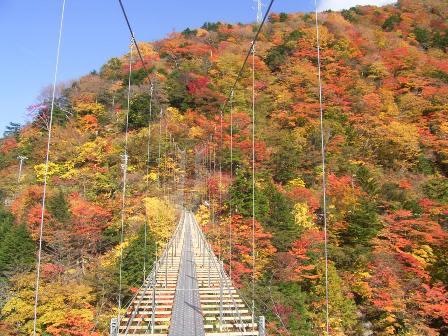 井川、畑薙大吊橋的紅葉。JPG