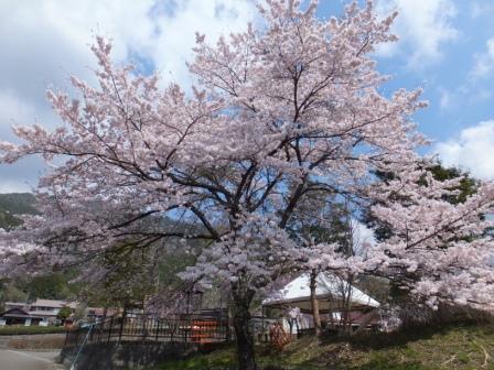 井川觀光會館2.JPG