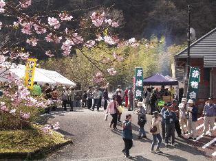 벚꽃 축제 1.JPG
