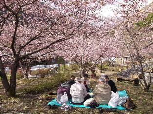 벚꽃 축제 2.JPG