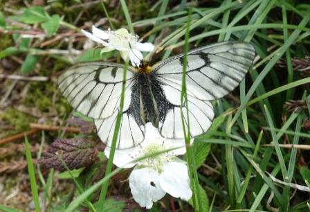 梅島的蝴蝶1.jpg