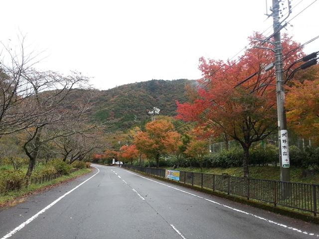 梅岛konya的家乡20131107-2.jpg
