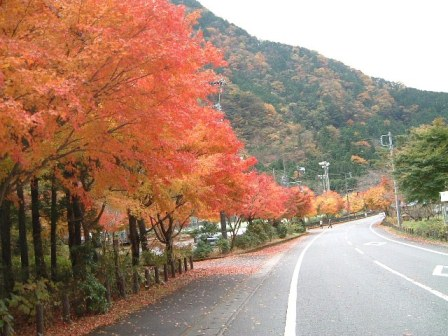 우메가시마 단풍 풍경(1).JPG