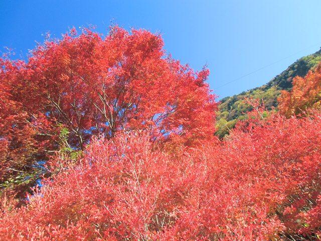 梅島紅葉2.jpg