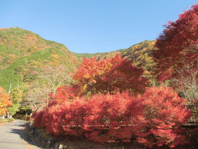 梅島紅葉3.jpg