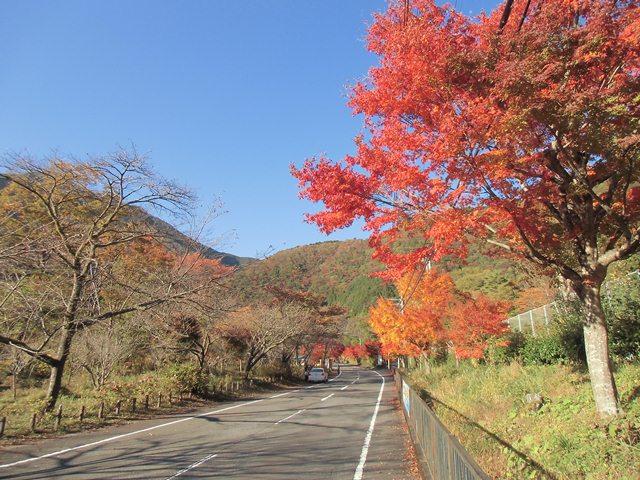 梅島紅葉4.jpg