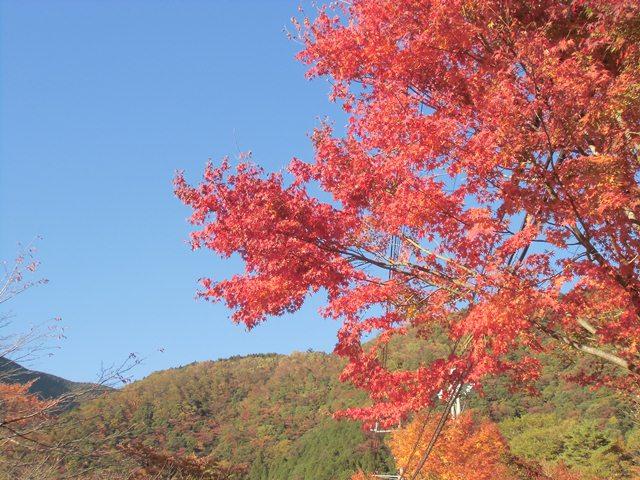 梅島紅葉5.jpg
