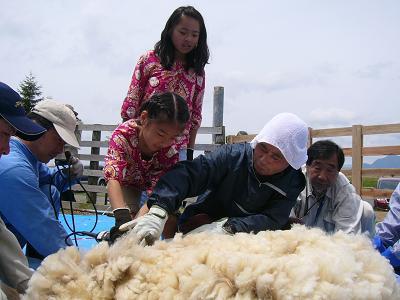 羊毛刈り.JPG