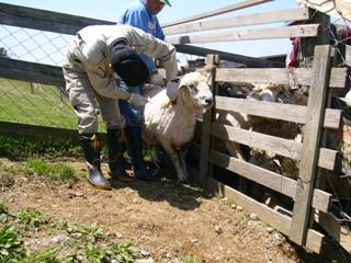 羊毛狩猎①.JPG