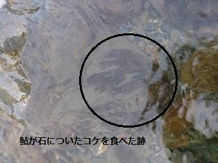 香鱼(富泽)1.jpg
