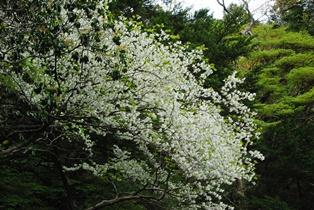 2014.5.19 shiroyashio(全景).JPG