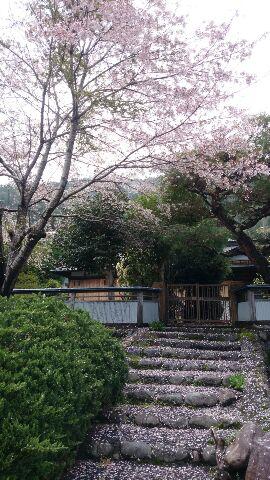 http://www.okushizuoka.jp/oshi/news/2015/04/16/20150416miki_001.jpg
