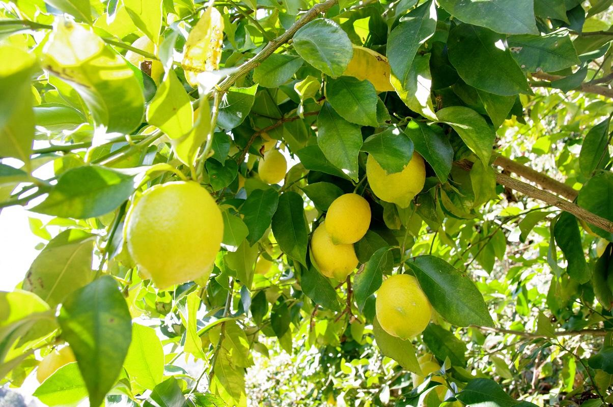 [奥静冈专栏]尝风景的-清泽柠檬―