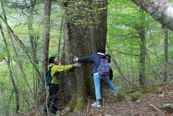 巨木の森ミズナラ.JPG