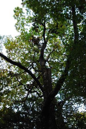 大树的森熊搁板1.JPG