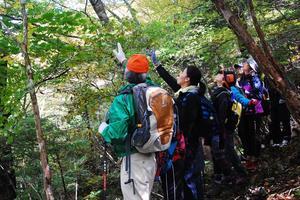 大树的森观察会1.JPG
