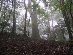巨木の森.JPG