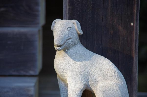 保护表示候选人4旱田的野狗。JPG